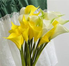 callalily, Mini, Flowers, callalilyflower