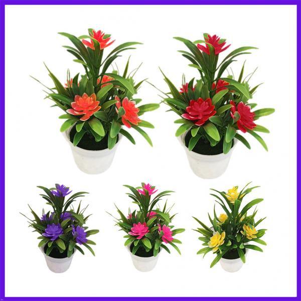 Bonsai, Home & Kitchen, Decor, Flowers