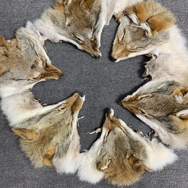 Head, fur, Animal, pelt