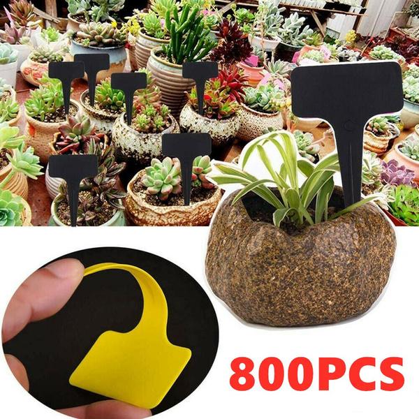 Plants, Flowers, Yard, Garden
