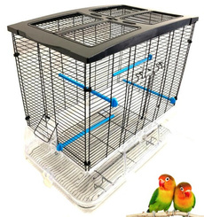 Clear, canary, Large, lovebird