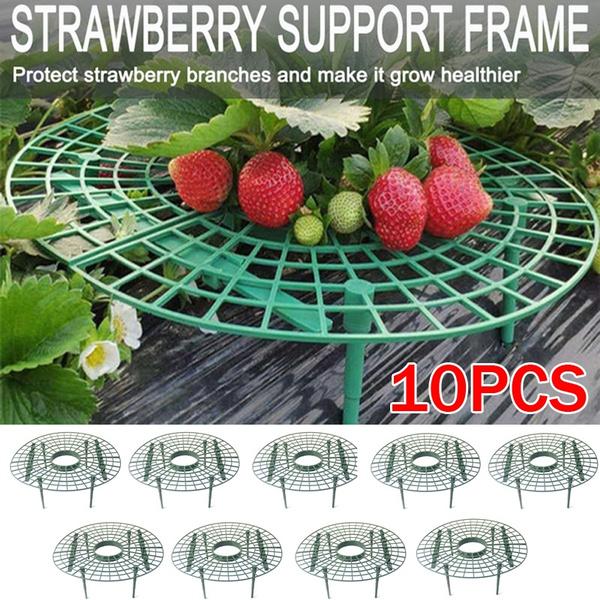 plantingrack, Plants, strawberrygrowingsupport, Gardening