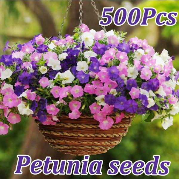 gardeningseed, Colorful, blossom, flowersandplant