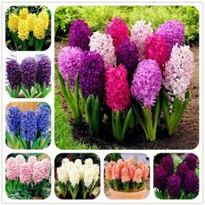 gardenseed, Flowers, Garden, plantsandseed