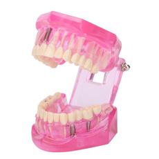 dentalmodel, crestwhitestrip, makeupbeauity, Tool