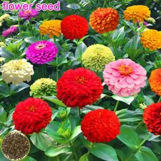 sunflowerseed, Flowers, Garden, bonsaipot