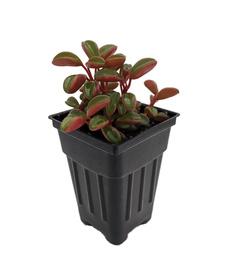 , $25, Plants, Tos