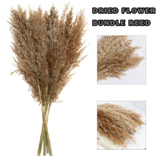 Decor, phragmitescommuni, pampasgrassdried, Grass