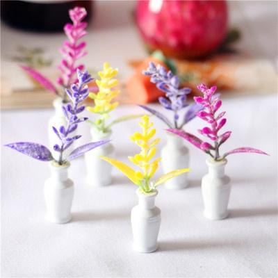 miniatureplant, Plants, Flowers, Garden