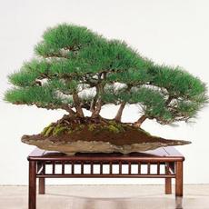 Bonsai, Gardening, Garden, Home & Living