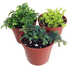 , Plants, Garden, mos