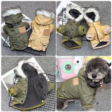 chihuahua, Winter, Pets, Dogs