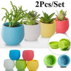 cute, Plants, Flowers, minipot