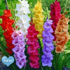 Bonsai, Beautiful, gladiolusbulb, Flowers
