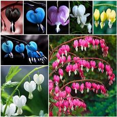 Bonsai, Heart, Plants, Flowers