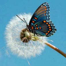 butterfly, DIAMOND, Wall Art, Home Decor