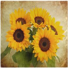 Beautiful, beautifulsunflower, polyestermaterial, vintageflower