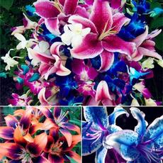 Bonsai, Decor, Flowers, Garden