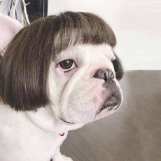 wig, petwig, lovely, noteasytofalloff