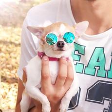 Fashion, Cat eye glasses, Pets, Dogs