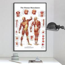 educationanatomicalposter, Posters, chartsposter, anatomicalposterset