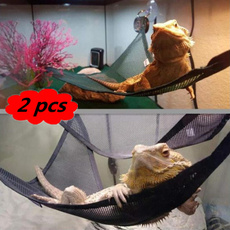 reptile, chameleon, Pets, For Your Pet