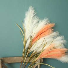 Plants, Flowers, rabbit, silkflowerhead