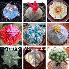Indoor, Plants, Flowers, rare