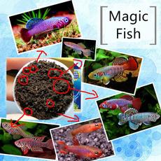 Toy, Magic, Pets, soil