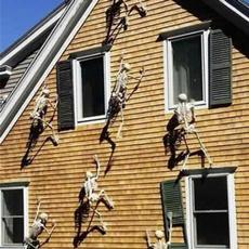 skeletondecordecoration, fluorescentskeleton, Skeleton, skull