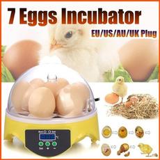 Mini, Farm, Eggs, egghatchingincubator