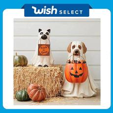halloweendecorationsoutside, outdoordecoration, puppy, courtyarddecoration