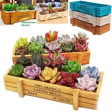 Box, succulent, Outdoor, Gardening
