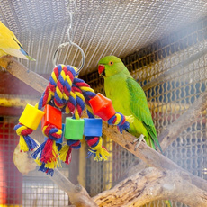 Funny, Toy, birdinteractivetoy, birdtoy