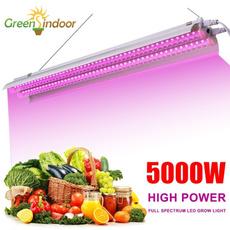 Plants, Indoor, led, hydroponic